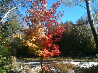 Fall colour at Sauble Falls.