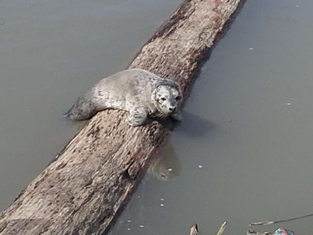 This baby seal was found in Wes Del Marina on July 8, 2013