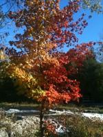 Sauble Falls October 9_2013