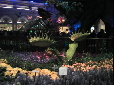 Venus Fly Trap at the Bellagio